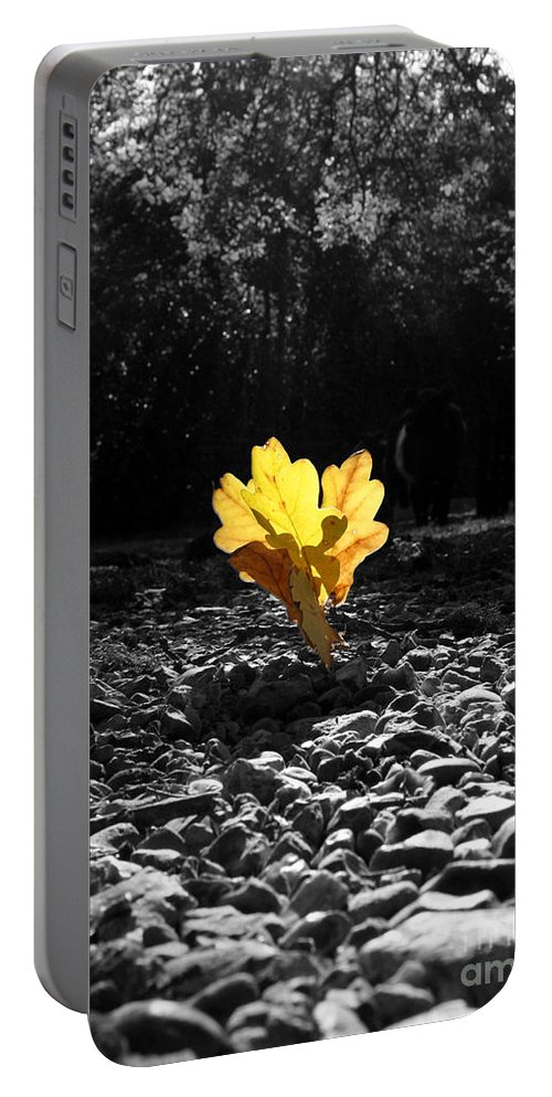 Autumn Woodland Portable Battery Charger featuring the photograph Autumn Oak Isolations by Terri Waters