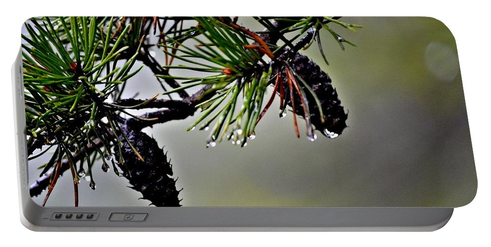 Pine Cones Portable Battery Charger featuring the photograph Autumn Rain by Tara Potts