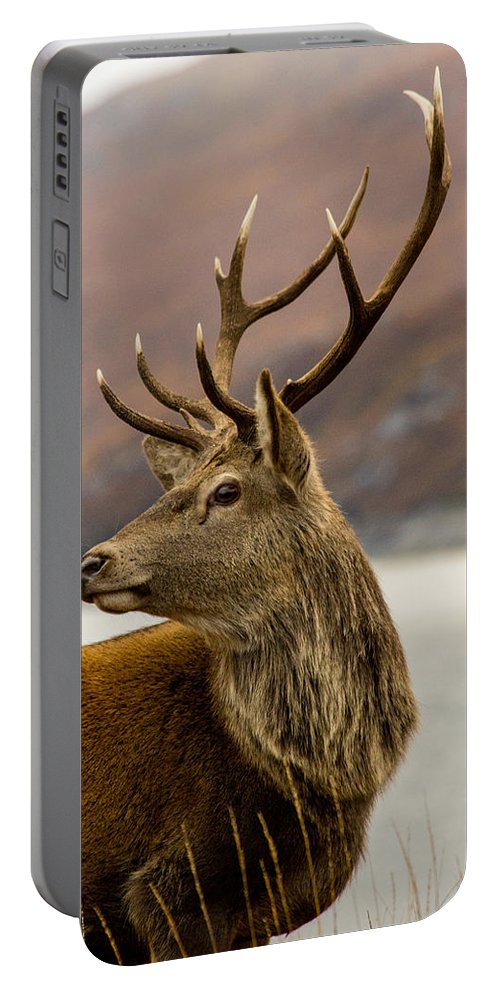 Alert Portable Battery Charger featuring the photograph Autumnal Stag by Derek Beattie