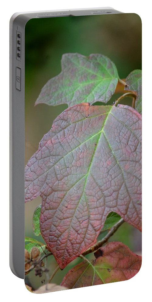 Autumn's Arrival Portable Battery Charger featuring the photograph Autumn's Arrival by Maria Urso