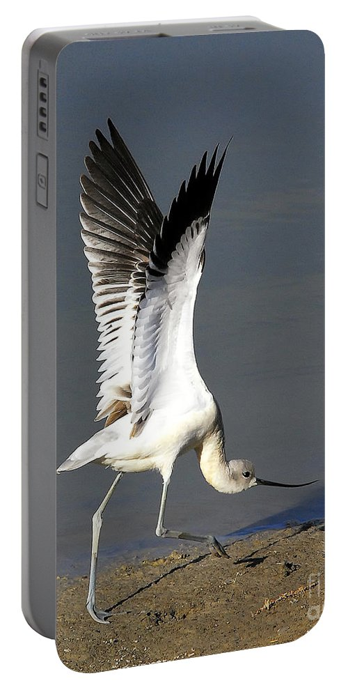 American Avocet Portable Battery Charger featuring the photograph Avocet Dancer by Timothy Flanigan