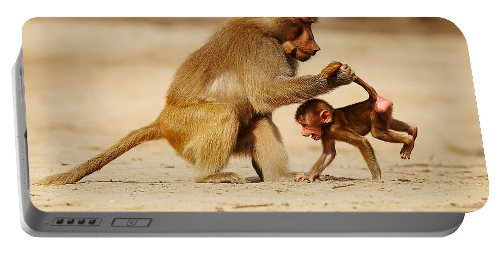 Baboon Portable Battery Charger featuring the photograph Baboon With Baby by Nick Biemans