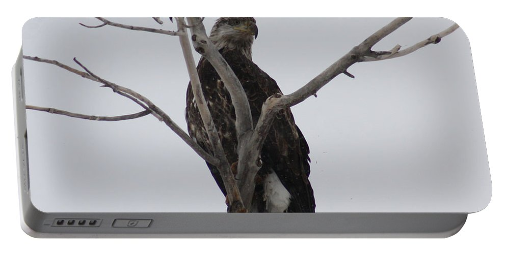 Bald Eagle Portable Battery Charger featuring the photograph Baby Bald Eagle by Brandi Maher