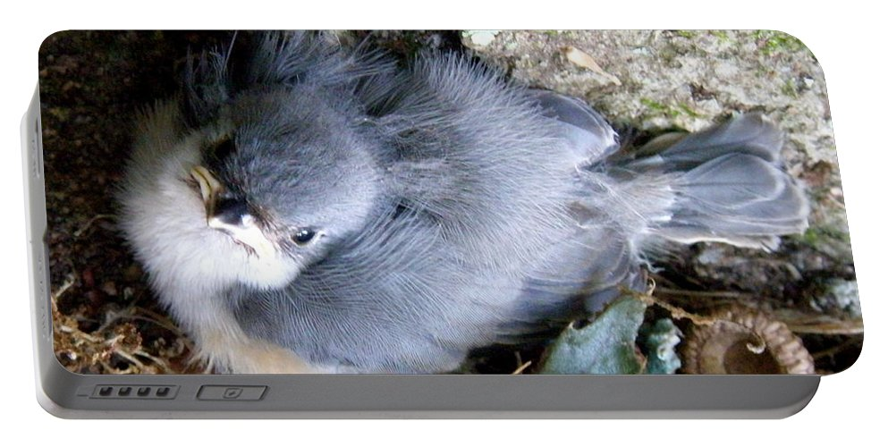 Baby Portable Battery Charger featuring the photograph Baby Bird Learns A Lesson by Lainie Wrightson