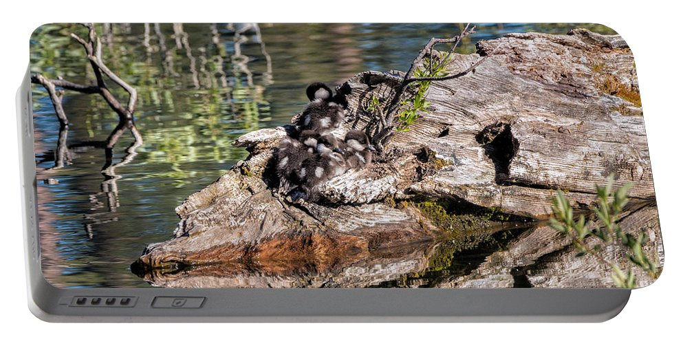 Bucephala Albeola Portable Battery Charger featuring the photograph Baby Buffleheads by Kathleen Bishop