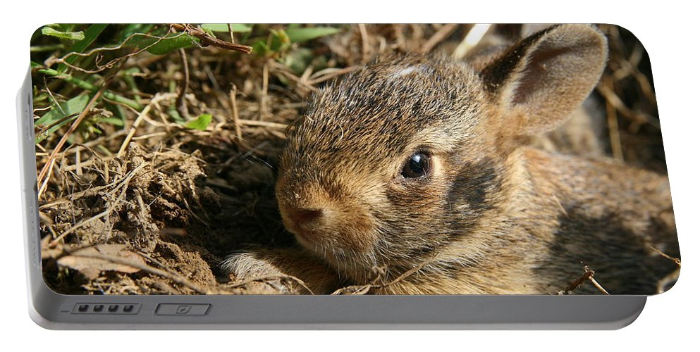 Cottontail Rabbit Portable Battery Charger featuring the photograph Baby Eastern Cottontail by Neal Eslinger