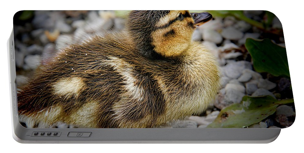 Baby Duck Portable Battery Charger featuring the photograph Baby Duck by Mariola Bitner
