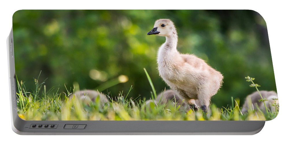 Duck Portable Battery Charger featuring the photograph Baby Duckling In The Morning Light by Parker Cunningham
