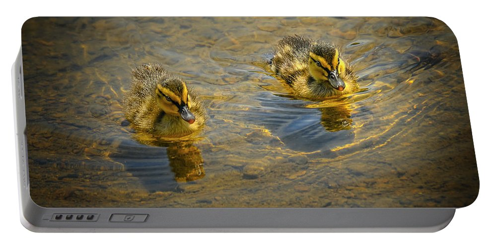 Baby Portable Battery Charger featuring the photograph Baby Ducks by LeeAnn McLaneGoetz McLaneGoetzStudioLLCcom