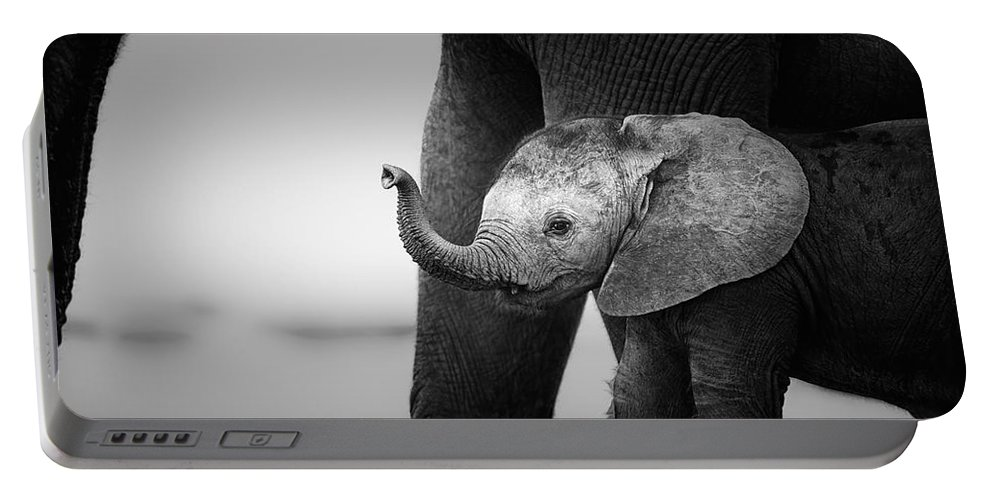 Elephant Portable Battery Charger featuring the photograph Baby Elephant next to Cow by Johan Swanepoel