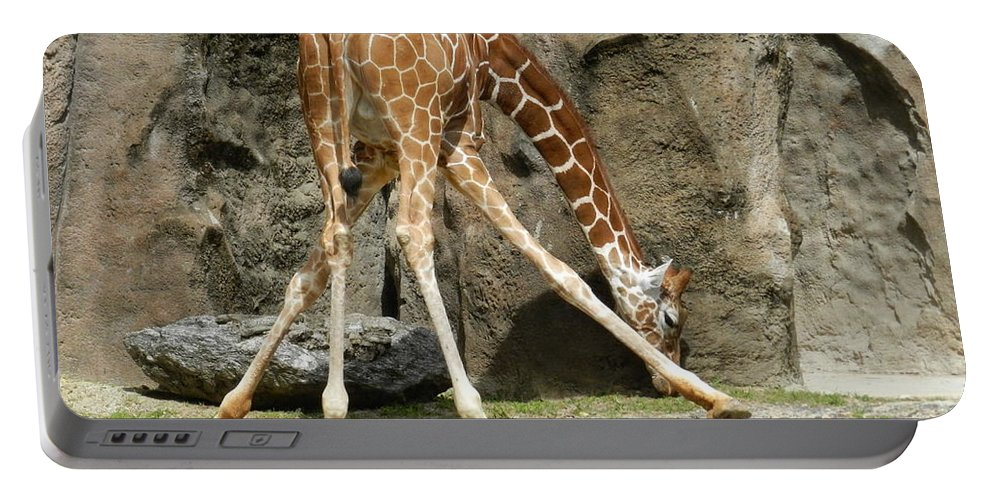 Baby Portable Battery Charger featuring the photograph Baby Giraffe 1 by Heather Jane