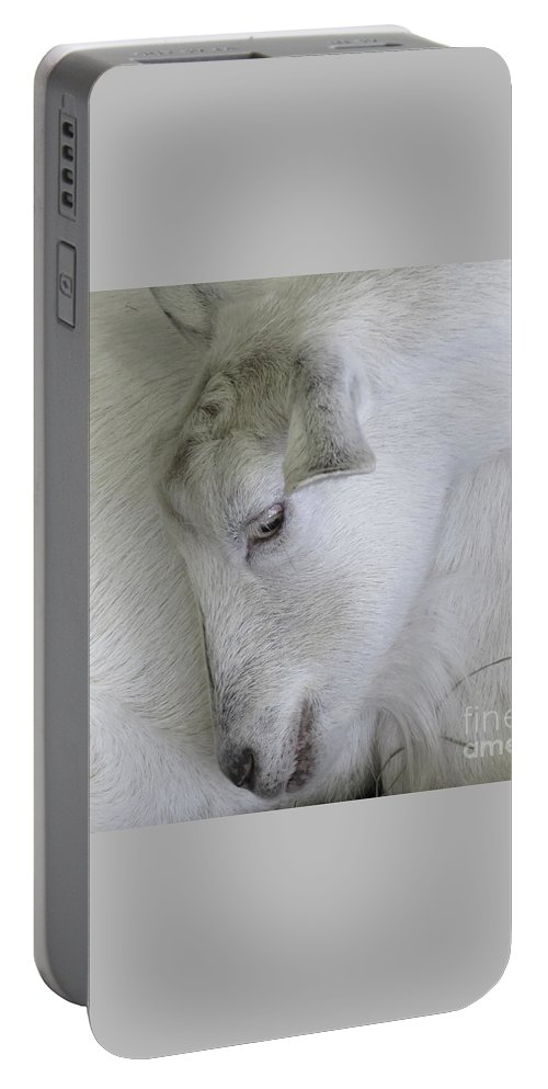 Goat Portable Battery Charger featuring the photograph Baby Goats by Ann Horn
