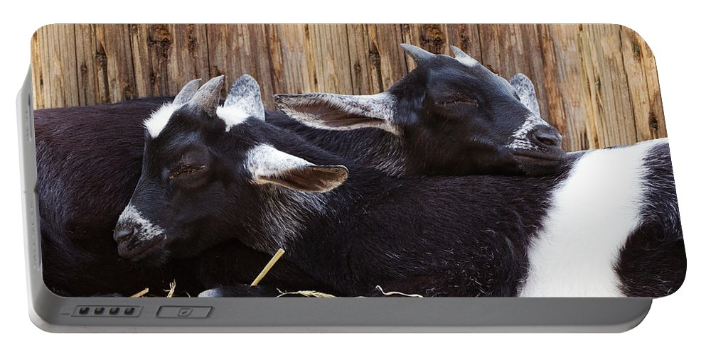 Goat Portable Battery Charger featuring the photograph Baby Goats Sleeping by Stephanie McDowell