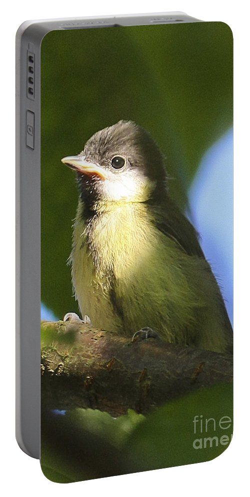 Bird Portable Battery Charger featuring the photograph Baby Coal Tit by Terri Waters