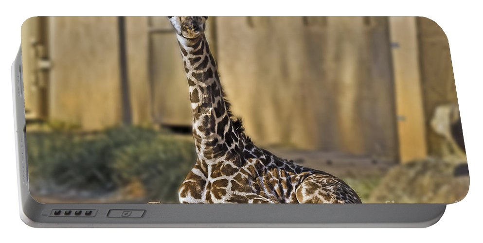 Landscape Portable Battery Charger featuring the photograph Baby Kiko by Elvis Vaughn