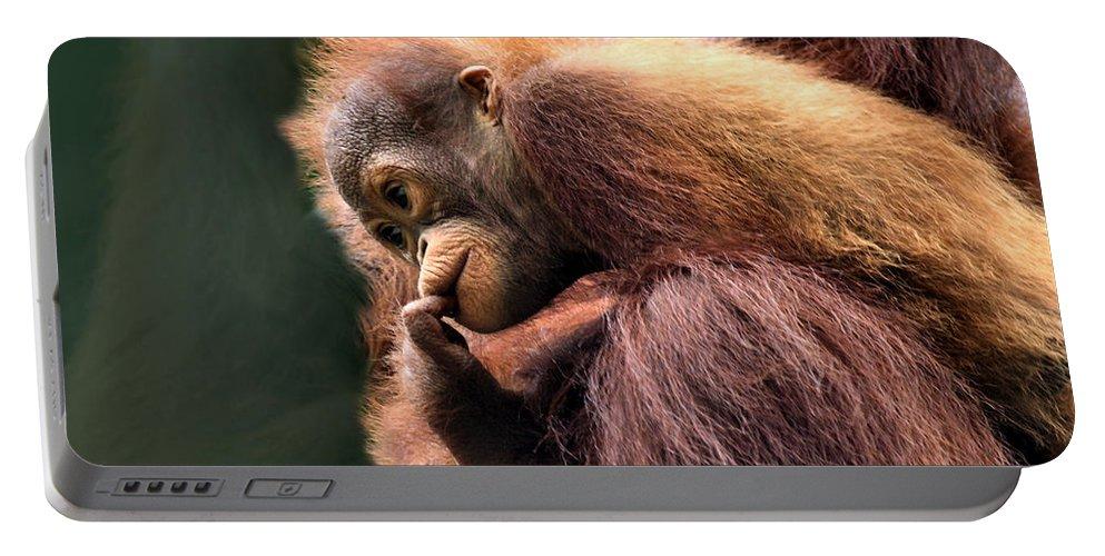 Orangutan Portable Battery Charger featuring the photograph Baby Orangutan Borneo by Carole-Anne Fooks
