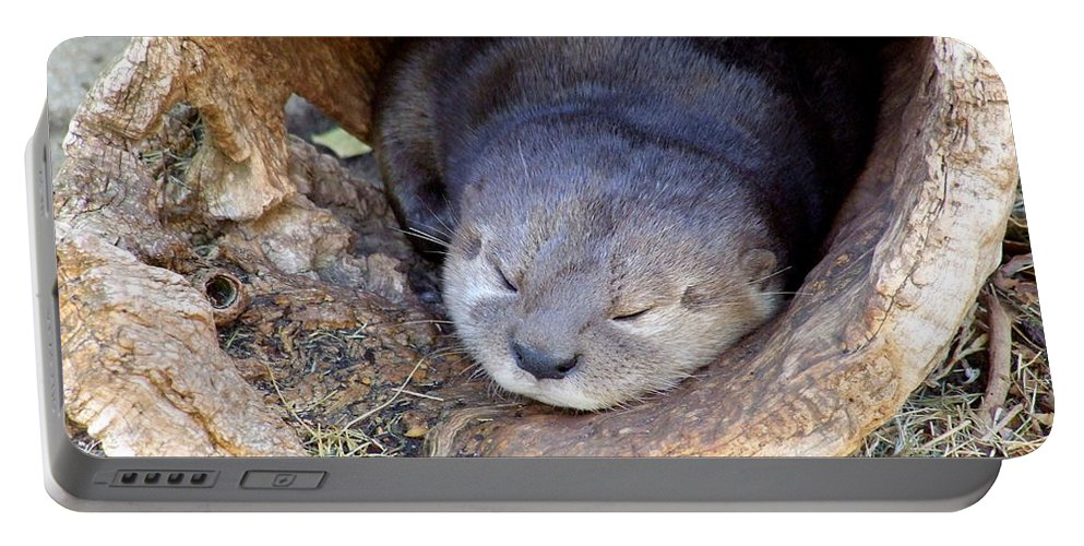 Otter Portable Battery Charger featuring the photograph Baby Otter by Mary Deal
