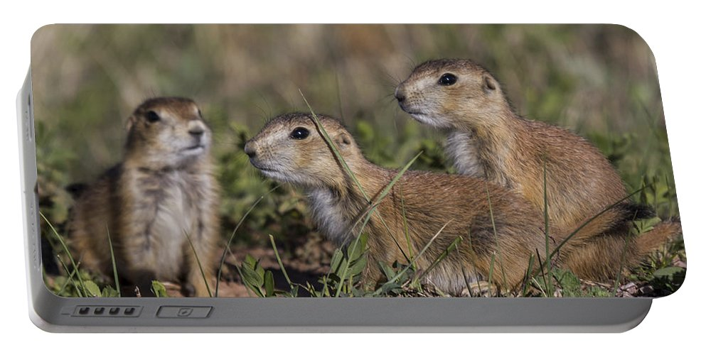 Dogs Portable Battery Charger featuring the photograph Baby Prairie Dogs by Steve Triplett