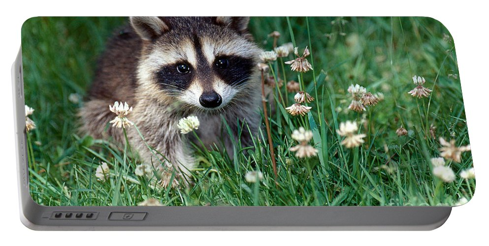 Raccoon Portable Battery Charger featuring the photograph Baby Raccoon by Jeanne White