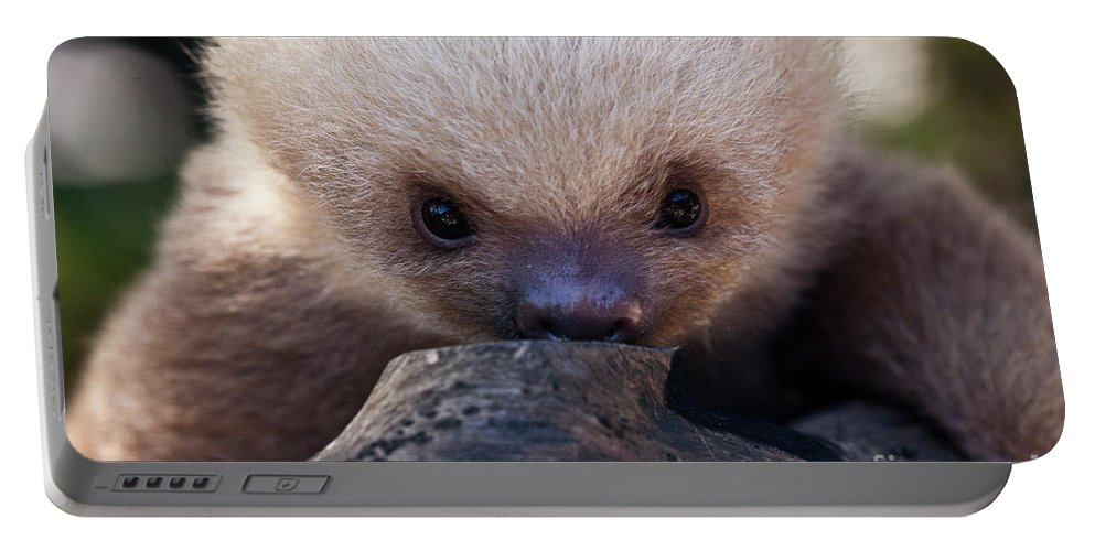 Sloth Portable Battery Charger featuring the photograph Baby Sloth 2 by Heiko Koehrer-Wagner
