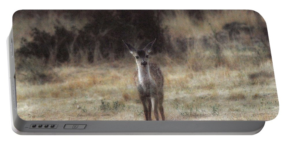 Fawn Portable Battery Charger featuring the photograph Baby Soft by Donna Blackhall