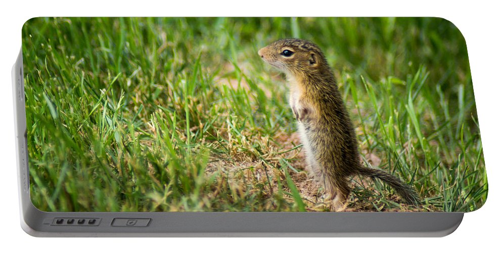 Bill Pevlor Portable Battery Charger featuring the photograph Baby Steps by Bill Pevlor