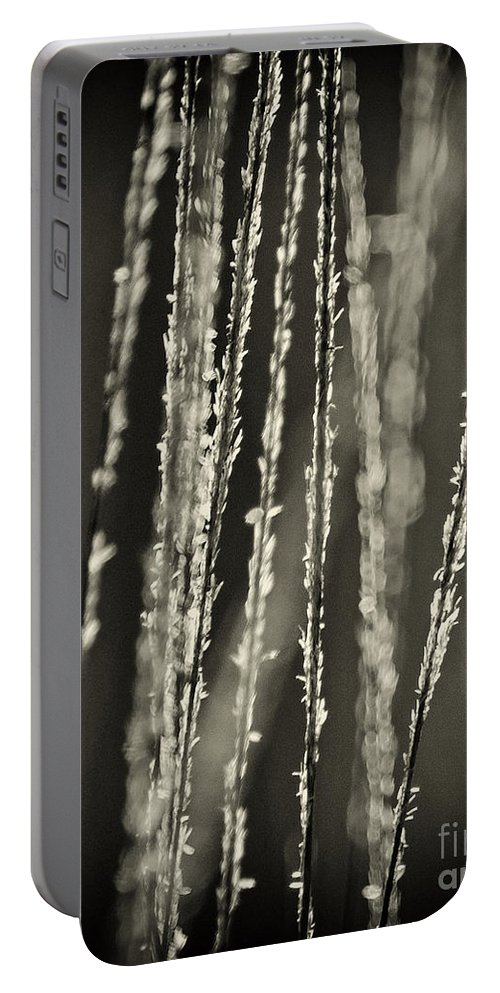North America Portable Battery Charger featuring the photograph Backlit Sepia Toned Wild Grasses In Black And White by Dave Welling