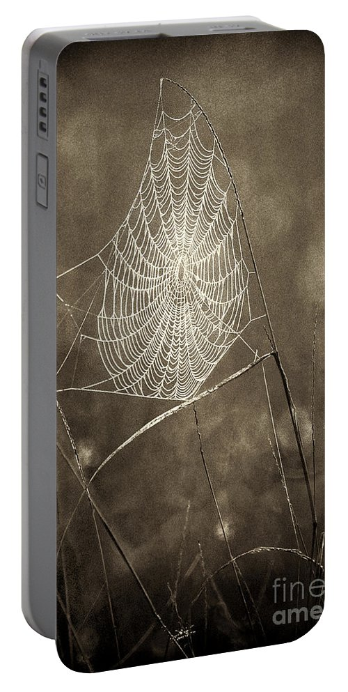 Wildlife Portable Battery Charger featuring the photograph Backlit Spider Web In Sepia Tones by Dave Welling