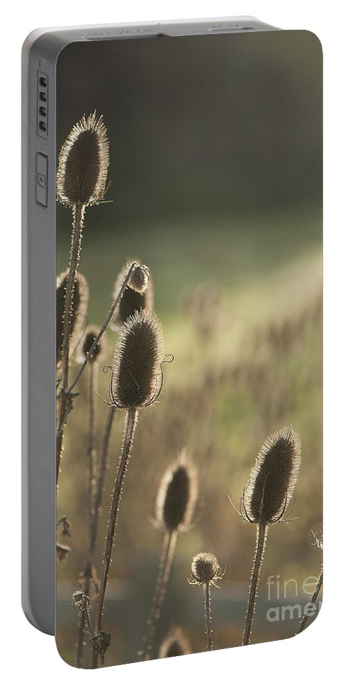 Anne Gilbert Portable Battery Charger featuring the photograph Backlit Teasel by Anne Gilbert