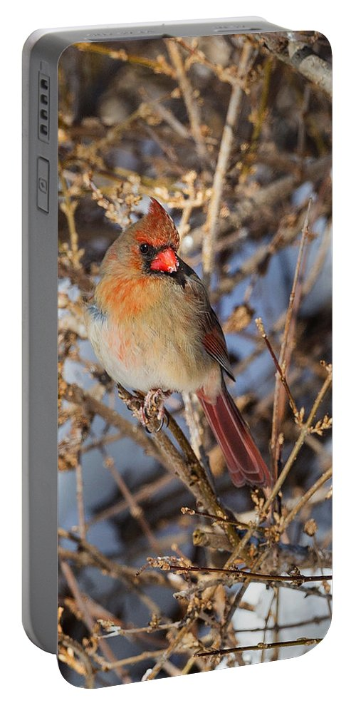 Cardinal Portable Battery Charger featuring the photograph Backyard Birds Female Nothern Cardinal by Bill Wakeley