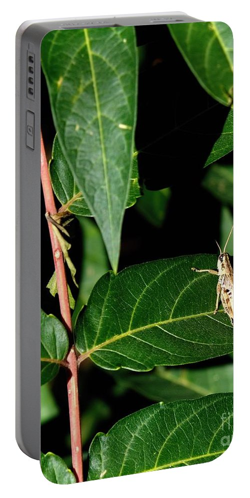 Digital Color Photo Portable Battery Charger featuring the digital art Backyard Hopper by Tim Richards