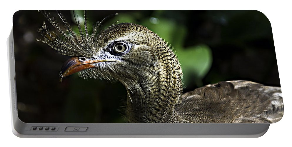 Birds Portable Battery Charger featuring the photograph Bad Feather Day by Ken Frischkorn