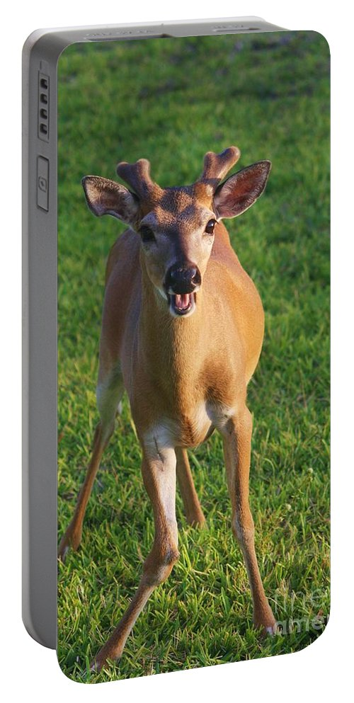 Deer Portable Battery Charger featuring the photograph Bahhh by Chuck Hicks
