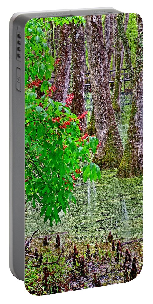 Bald Cypress And Red Buckeye Tree At Mile 122 Of Natchez Trace Parkway Portable Battery Charger featuring the photograph Bald Cypress And Red Buckeye Tree At Mile 122 Of Natchez Trace Parkway-mississippi by Ruth Hager