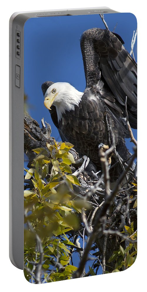 Bald Eagle Portable Battery Charger featuring the photograph Bald Eagle On Nest Near The Oxbow by Gary Langley