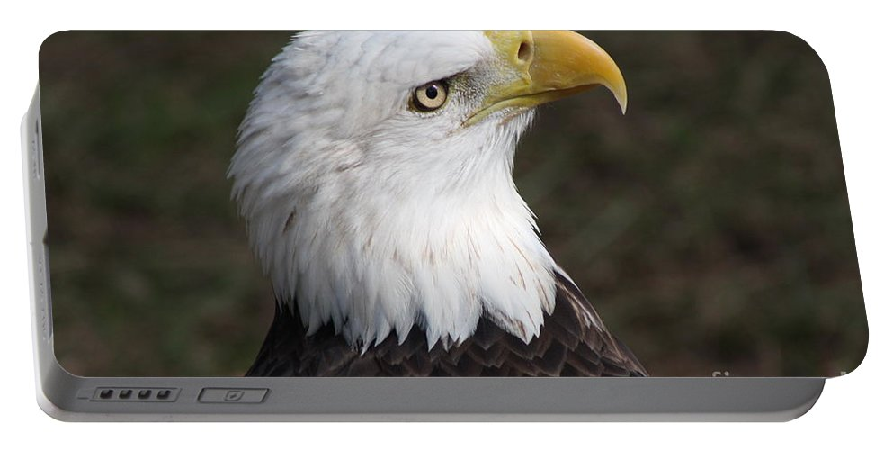 Eagle Portable Battery Charger featuring the photograph Bald Eagle Portrait by Christiane Schulze Art And Photography