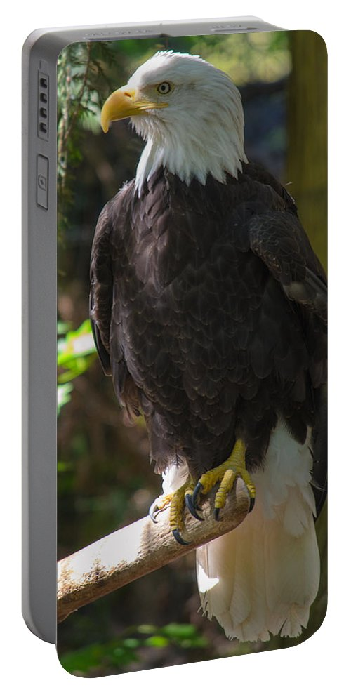 Eagle Portable Battery Charger featuring the photograph Bald Eagle by Tikvah's Hope