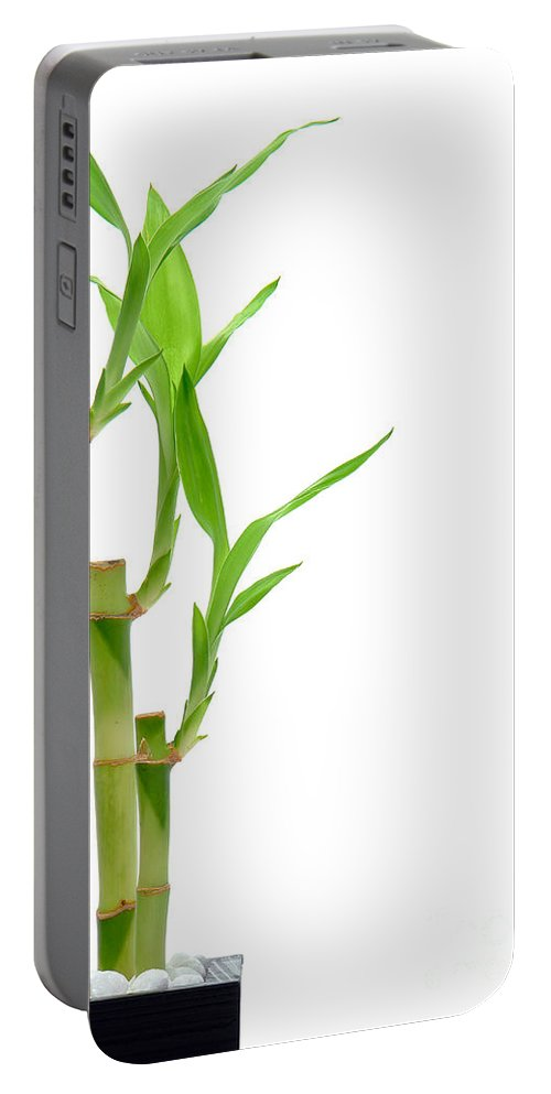 Bamboo Portable Battery Charger featuring the photograph Bamboo Stems In Black Vase by Olivier Le Queinec
