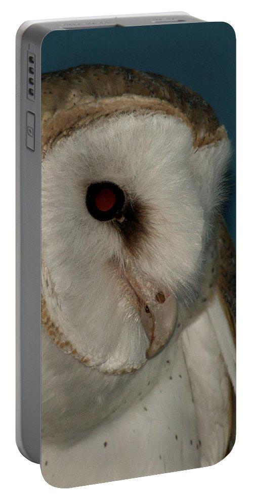 Barn Owl Portable Battery Charger featuring the photograph Barn Owl 2 by Ernie Echols