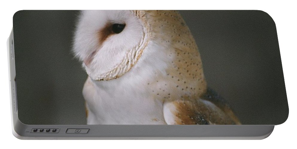 Barn Owl Portable Battery Charger featuring the photograph Barn Owl by David Porteus