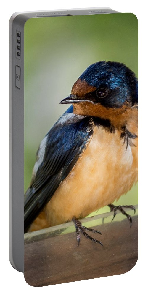 Barn Swallows Portable Battery Charger featuring the photograph Barn Swallow by Ernie Echols