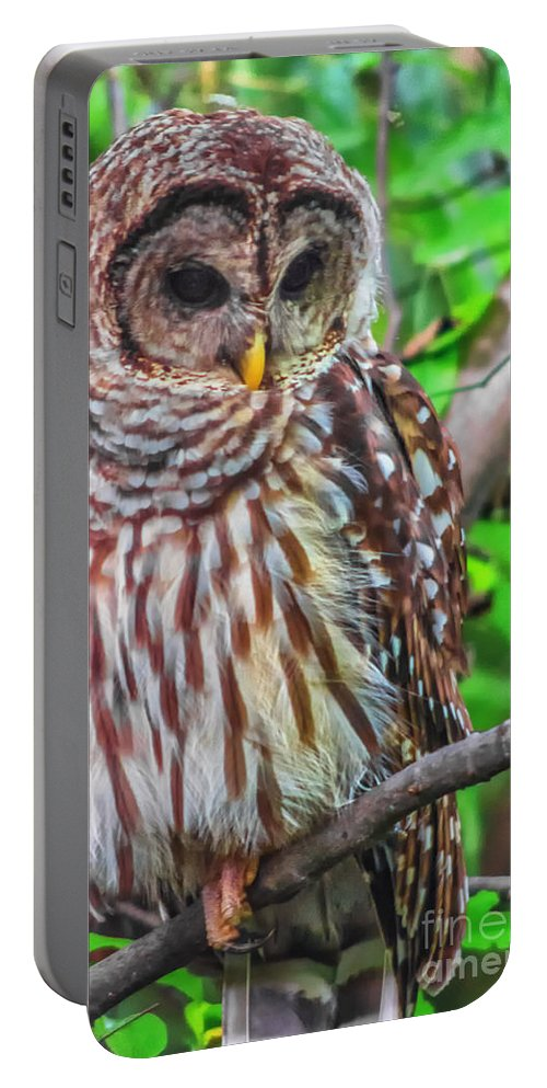 Barred Portable Battery Charger featuring the photograph Barred Owl by Scott Hervieux