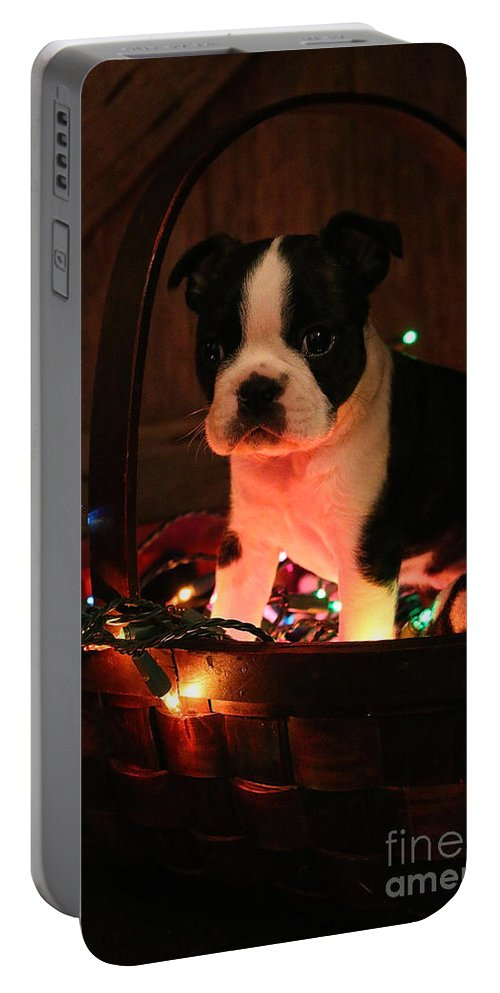 Animal Portable Battery Charger featuring the photograph Basket Baby by Susan Herber