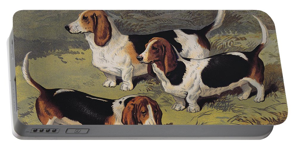 Dogs Portable Battery Charger featuring the painting Basset Hounds by English School