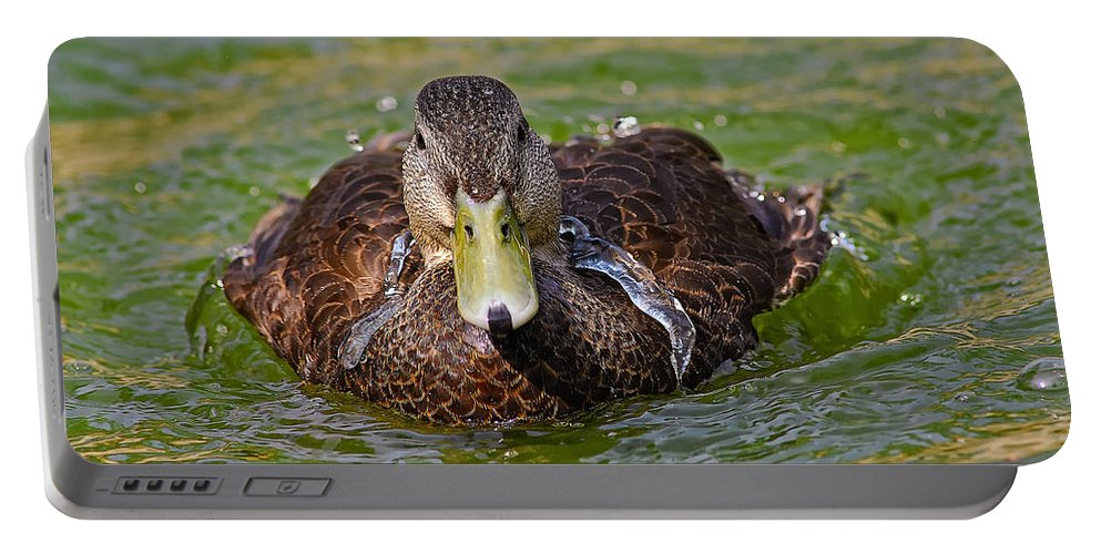Black Duck Portable Battery Charger featuring the photograph Bathing Black Duck by Timothy Flanigan