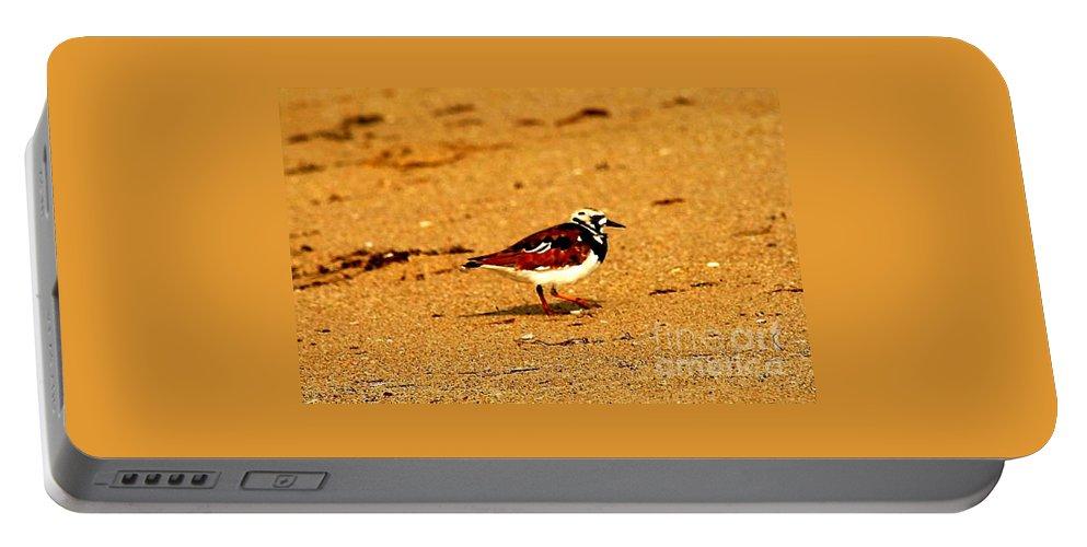 Shore Bird Portable Battery Charger featuring the photograph Beach Bird 1 by Anita Lewis