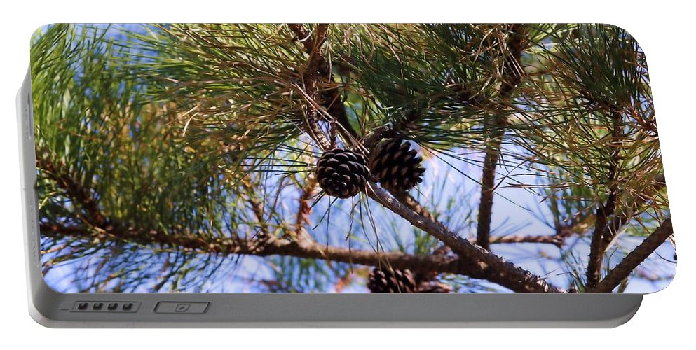 Pine Tree Portable Battery Charger featuring the photograph Beach Pine by Robert McCulloch