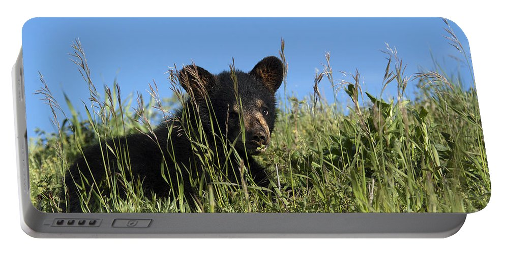American Black Bear Portable Battery Charger featuring the photograph Bear Cub Summer School by Wildlife Fine Art