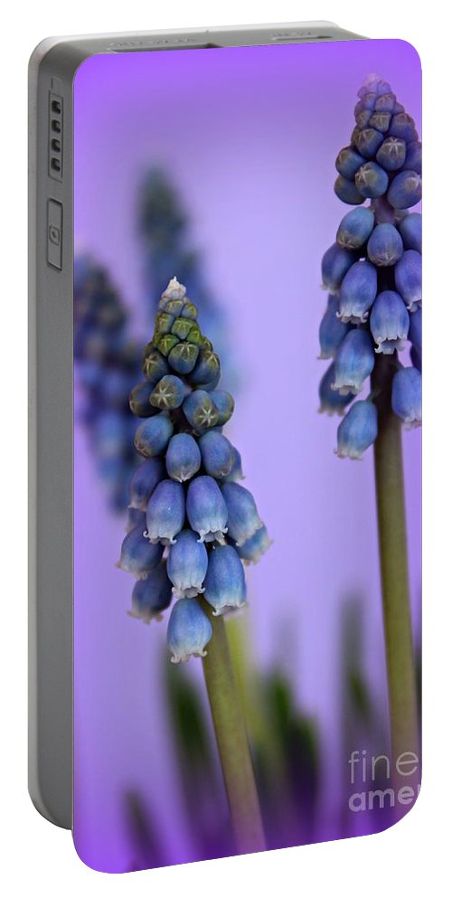 Grape Hyacinth Portable Battery Charger featuring the photograph Beautiful Blue by Clare Bevan