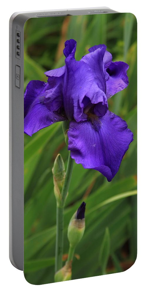 Reid Callaway Purple Iris Flower Portable Battery Charger featuring the photograph Beautiful Purple Iris Flower Art by Reid Callaway